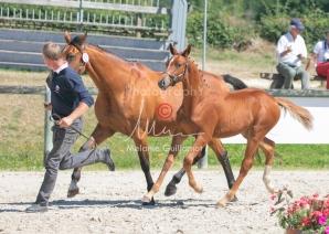 Foal 25 HDP Régional 2020-250675
