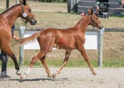 Foal 25 HDP Régional 2020-250692