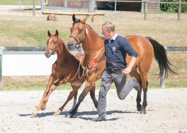 Foal 25 HDP Régional 2020-250703