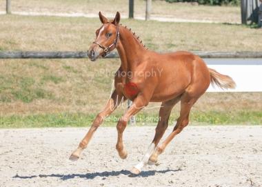 Foal 25 HDP Régional 2020-250708