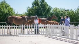 Foal 27 HDP Régional 2020-270900