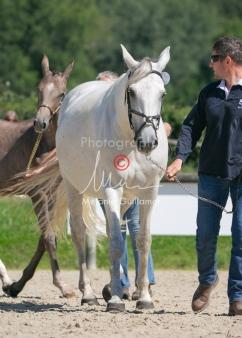 Foal 27 HDP Régional 2020-270902