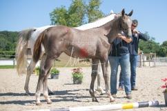 Foal 27 HDP Régional 2020-270910