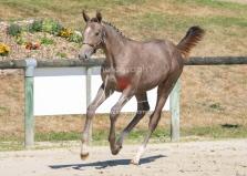 Foal 27 HDP Régional 2020-270923