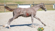 Foal 27 HDP Régional 2020-270926