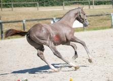Foal 27 HDP Régional 2020-270927
