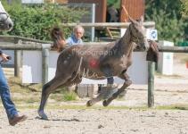 Foal 27 HDP Régional 2020-270941