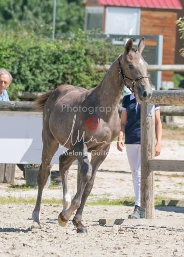 Foal 27 HDP Régional 2020-270955