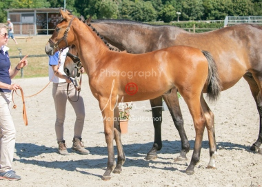 Foal 29 HDP régional 2020-290417