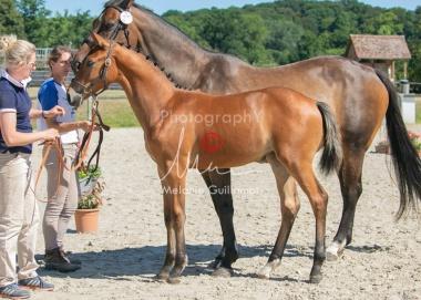 Foal 29 HDP régional 2020-290418