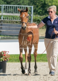 Foal 29 HDP régional 2020-290427