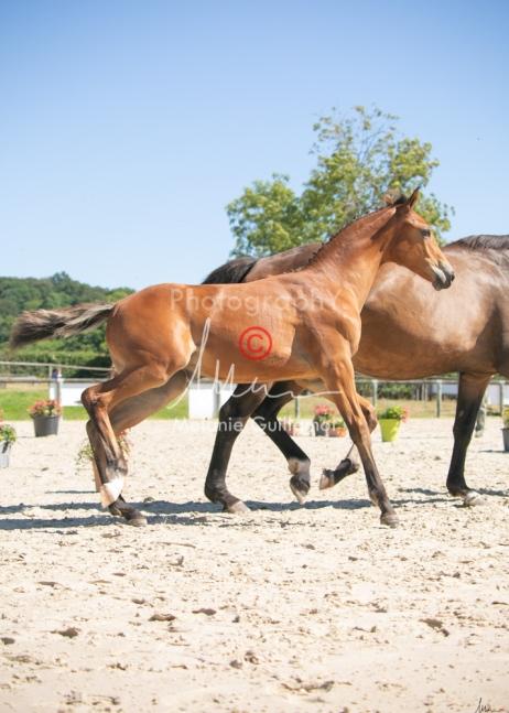 Foal 29 HDP régional 2020-290469