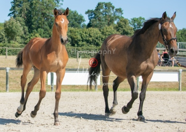 Foal 29 HDP régional 2020-290474