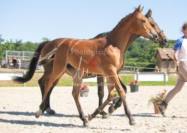 Foal 29 HDP régional 2020-290475