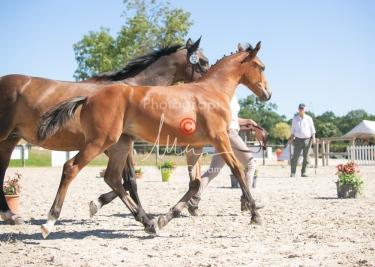 Foal 29 HDP régional 2020-290476