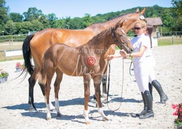 Foal 30 HDP Régional 2020-301050
