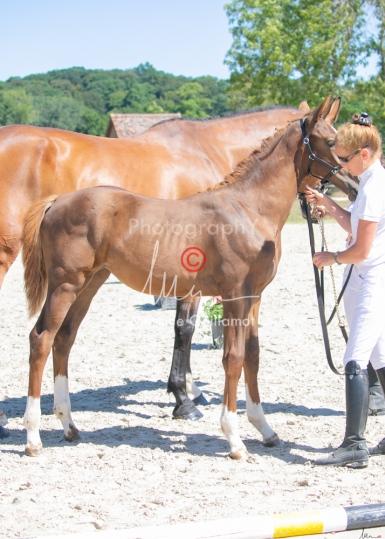 Foal 30 HDP Régional 2020-301052