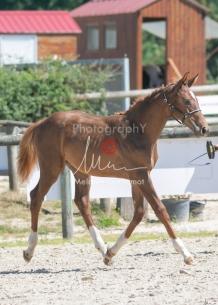 Foal 30 HDP Régional 2020-301085