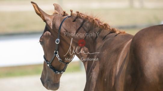 Foal 30 HDP Régional 2020-301091
