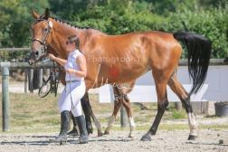 Foal 30 HDP Régional 2020-311030