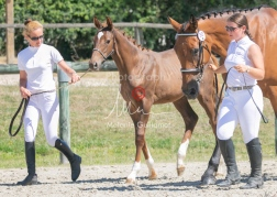 Foal 30 HDP Régional 2020-311034
