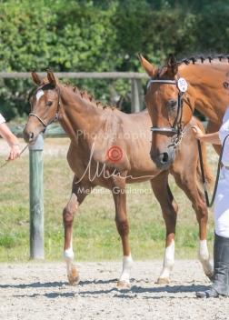 Foal 30 HDP Régional 2020-311035