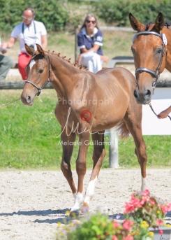 Foal 30 HDP Régional 2020-311038