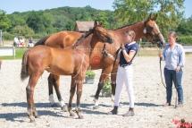 Foal 31 HDP Régional 2020-310965