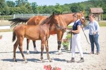 Foal 31 HDP Régional 2020-310969