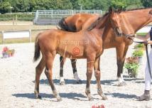 Foal 31 HDP Régional 2020-310970