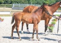 Foal 31 HDP Régional 2020-310971
