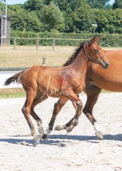 Foal 31 HDP Régional 2020-311011
