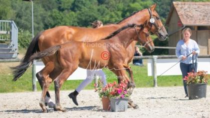 Foal 31 HDP Régional 2020-311020