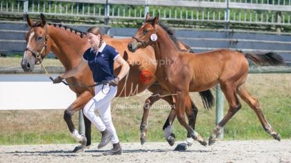 Foal 31 HDP Régional 2020-311023