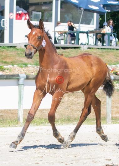Foal 31 HDP Régional 2020-311026