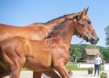 Foal 31 HDP Régional 2020-311029