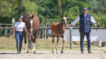 Foal 32 HDP Régional 2020-250715
