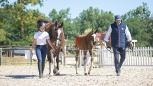 Foal 32 HDP Régional 2020-250719
