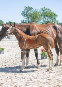 Foal 32 HDP Régional 2020-320731