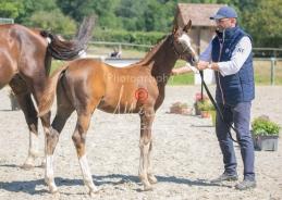 Foal 32 HDP Régional 2020-320733