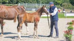 Foal 32 HDP Régional 2020-320734