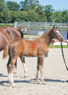 Foal 32 HDP Régional 2020-320735