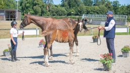 Foal 32 HDP Régional 2020-320741