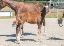 Foal 32 HDP Régional 2020-320742
