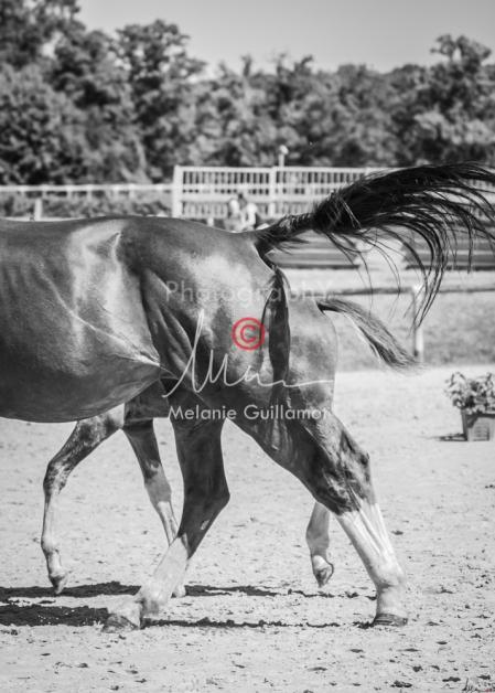 Foal 32 HDP Régional 2020-320755