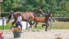 Foal 32 HDP Régional 2020-320780