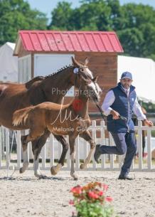 Foal 32 HDP Régional 2020-320786