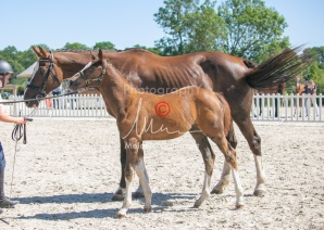Foal 32 HDP Régional 2020-320796