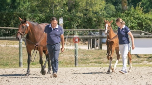 Foal 33 HDP Régional 2020-320801