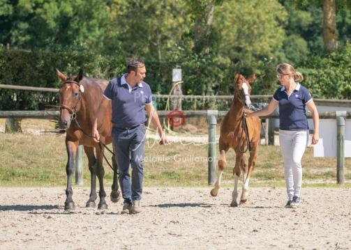 Foal 33 HDP Régional 2020-320803